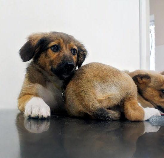 Полтавский предприниматель Баляшкин Денис Игоревич помогает бездомным животным!