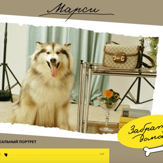 «РБК Стиль» и Gucci выпустили социальный интерактивный проект «А погладить можно?», чтобы привлечь внимание к животным-подопечным приютов.